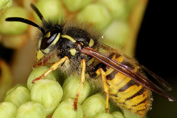 Easy ways to Get Rid of Wasps
