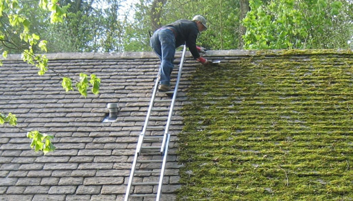What Is the Best Way to Remove Moss from a Tiled Roof