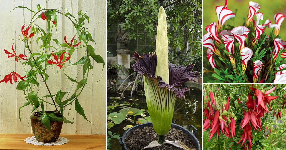 KNOWING ABOUT UNUSUAL FLOWERS IN INDIA
